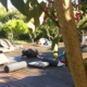 Ashtanga Vinyasa Yoga Retreat   July 2021 ॐ WOLFS YOGA