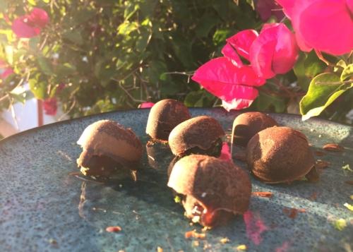 Ashtanga Vinyasa Yoga Retreat | July 2021 ॐ WOLFS YOGA